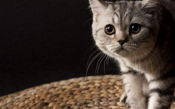 猫咪爱抓沙发 训练纠正有方法